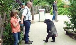 Maymun isyanı