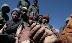 Nepal'de hayatları değiştiren tırtıl mantarı
