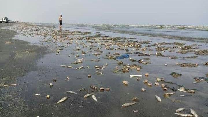 Photo of شاهد بالصور .. تفريغ الإمارات للمخلفات الكيميائية في المياه اليمنية يهدد الثروة السمكية بالفناء
