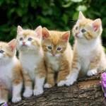ماذا تاكل القطط من طعام البيت وما هي الاطعمة الضارة على القطط