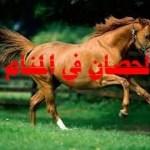 رؤية الحصان في المنام للعزباء والمتزوجة بالتفصيل