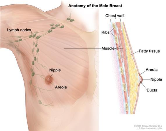تجربتي مع تليف الثدي وكيفية علاجه