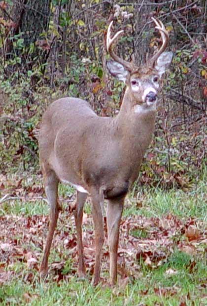 Young Buck November 2006