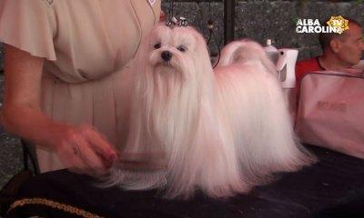 expozitie-canina-alba-iulia
