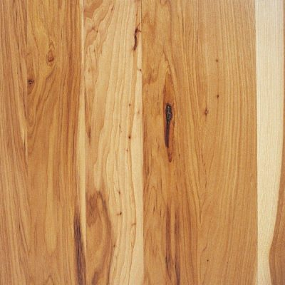 Copy of B1883-american hickory