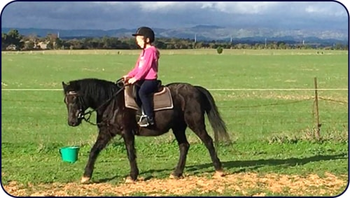 Adelaide Northern Horse Riding School - Stella