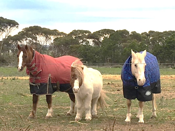 Alba View Equestrian Horse Riding Adelaide - Horse Mad Gang 2018-14