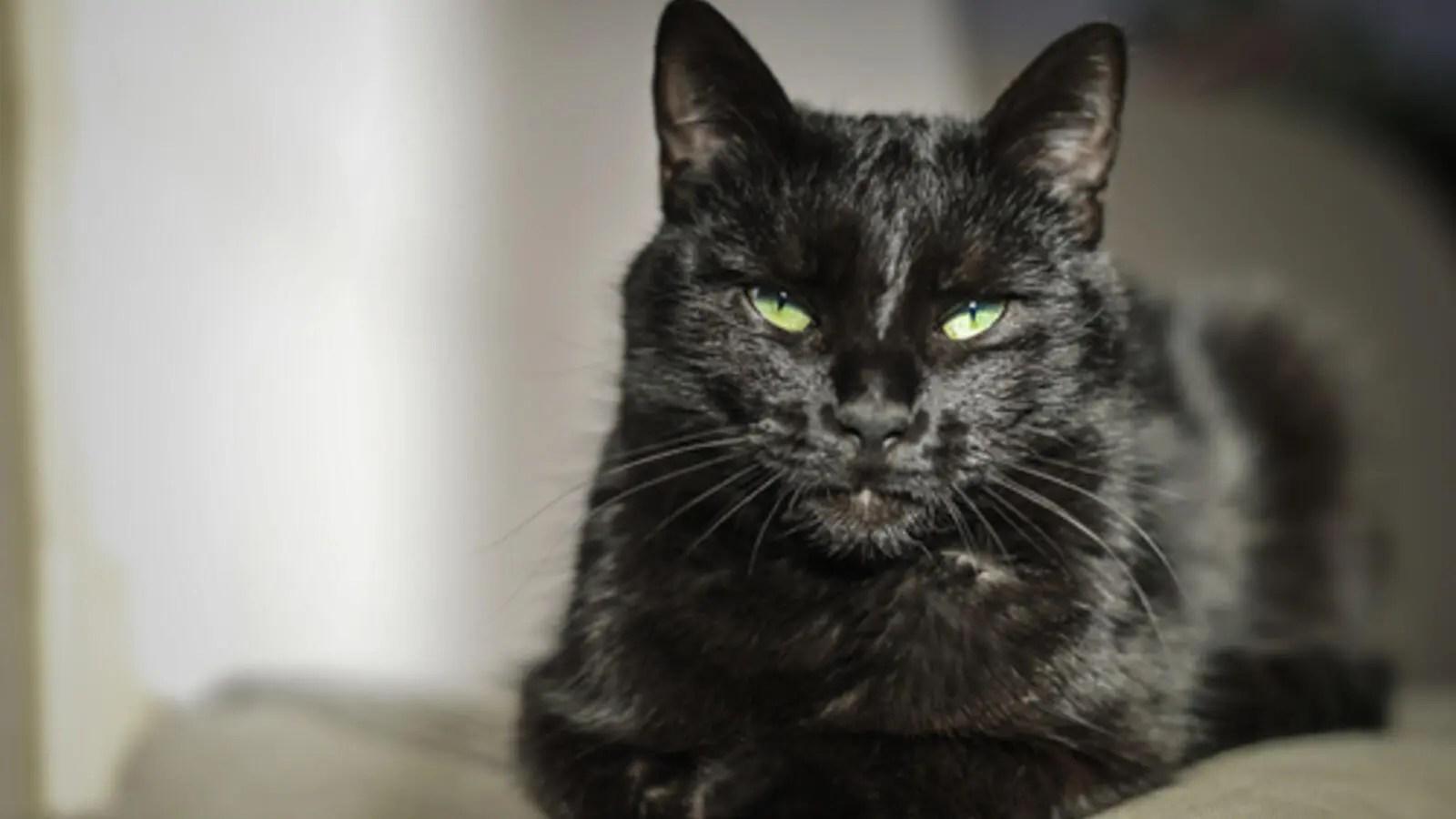 تفسير حلم القطط في المنام للنابلسي البوابة