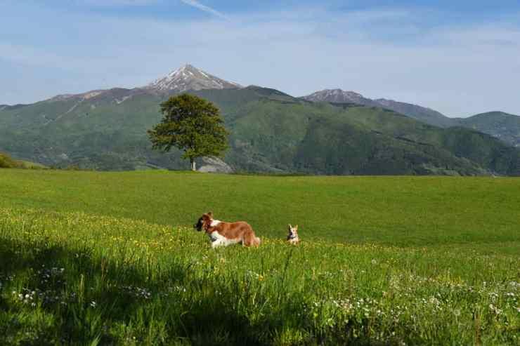 Vista del Monte Cimone dalla Via Vandelli (Sant'Andrea Pelago)