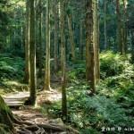 網站近期文章:東眼山國家森林遊樂區.桃園復興景點(路線攻略、交通方式、優惠門票,自導式步道海拔1212公尺的台灣小百岳)