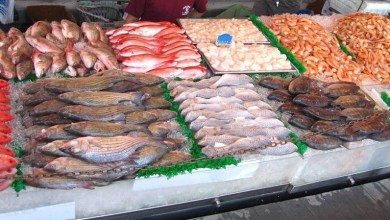 Photo of تطوّر صادرات منتجات الصّيد البحـري ب8 بالمائة