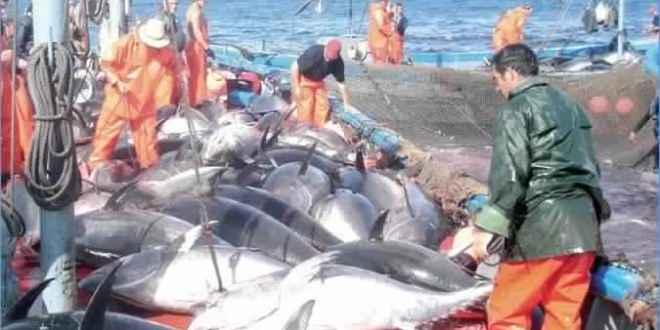 سنة 2020 : 5 رخص جديدة لصيد التن الاحمر
