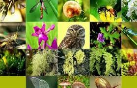 حماية التنوع البيولوجي حماية لمستقبل الإنسان