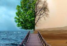 Photo of تأثيرات تغير المناخ على الأشجار
