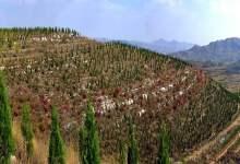 صورة في الصين مشروع تشجير على مساحة  66915 هكتار
