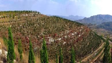 Photo of في الصين مشروع تشجير على مساحة  66915 هكتار