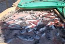 Photo of المصادقة على البلاد التونسية ضمن قائمة البلدان المصدرة لأسماك التربية  نحو الفضاء الأوروبي