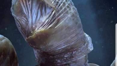 صورة البلاستيك الذي تستخدمه اليوم سيعذب المحيط إلى الأبد !
