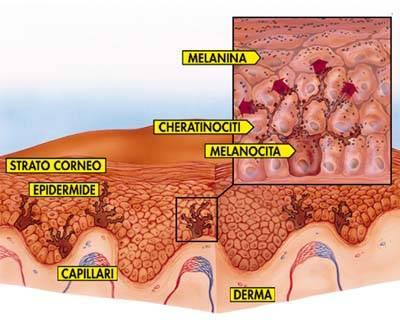 Risultati immagini per attivazione cheratinociti