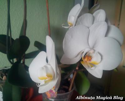 Tot ce trebuie să ştiţi despre orhidee! Indicaţii preţioase despre îngrijire şi înmulţire!