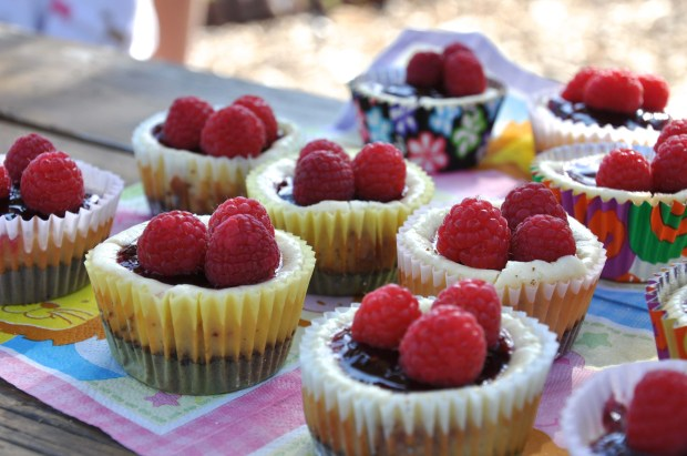 Chocolate Bottom Cheesecake Cups topped with Raspberries