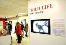 Wild Life de Iván Correa en la casa de la Juventud