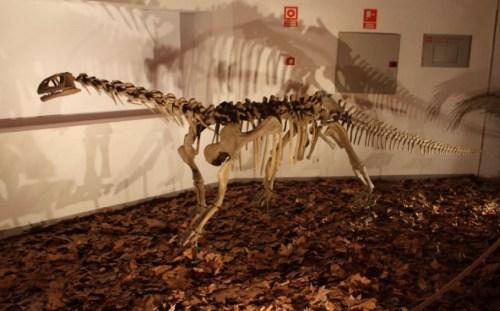 dinopetrea-alcala-henares-3
