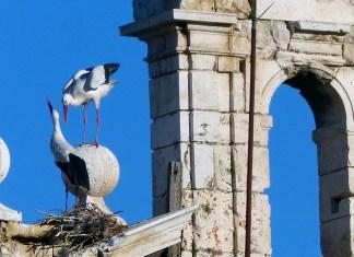 Las cigüeñas de San Ildefonso