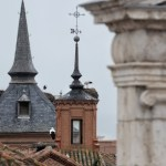 Cigüeñas confinadas en la ciudad patrimonio