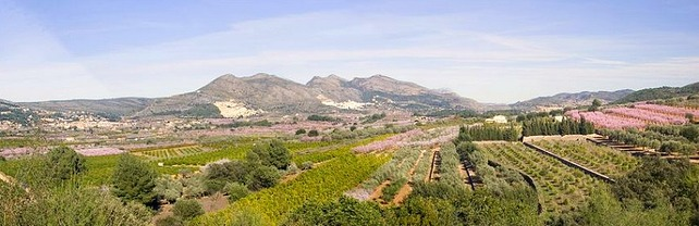 Almendros en flor Alcalali Costablanca ComunidadValenciana