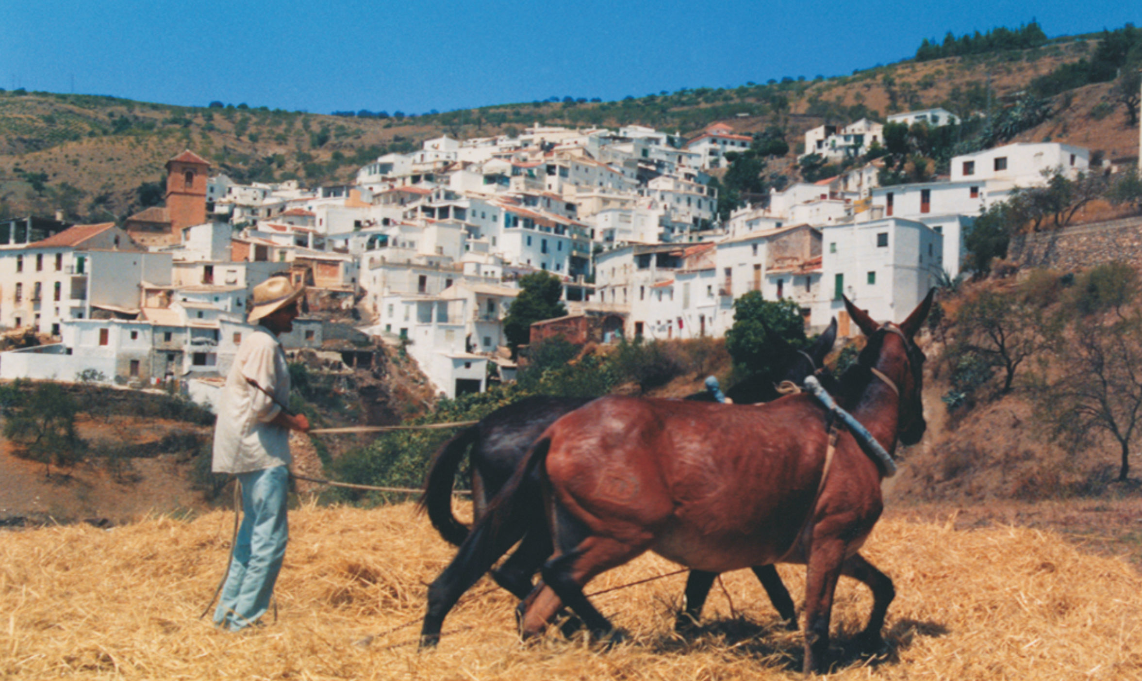 sliderfoto-paarden
