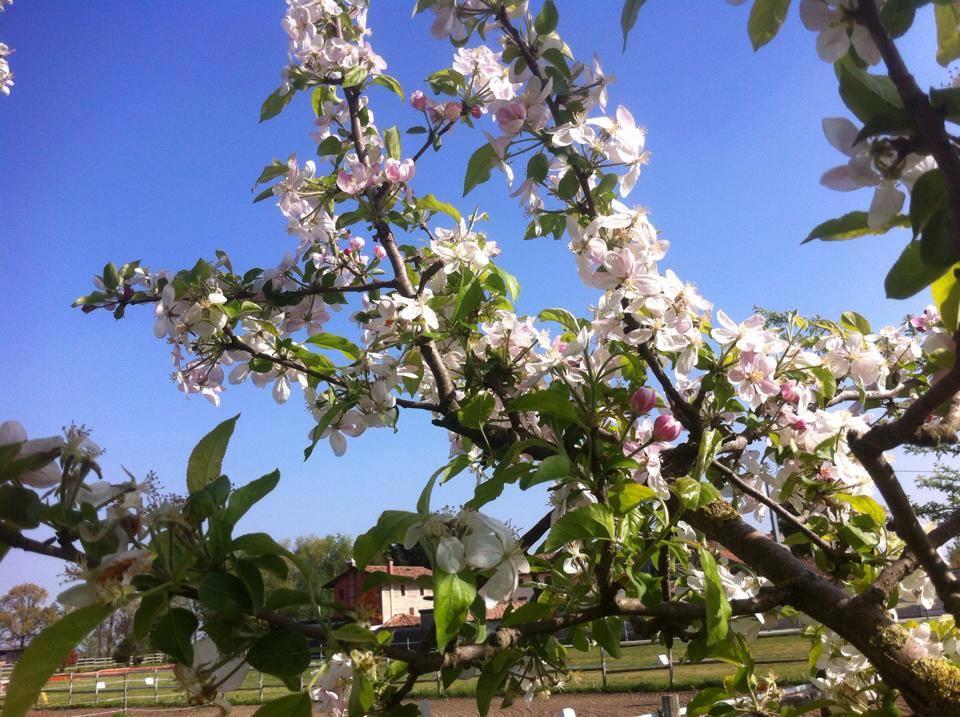 10384056 10152947627083305 5016086502709031064 n Al Casale è sbocciata la bella stagione