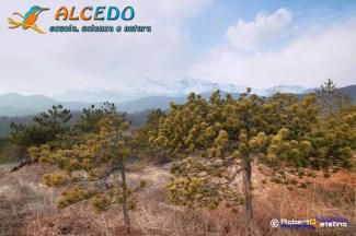 IMG_2696_7_8_tonemapped-1500 alcedo