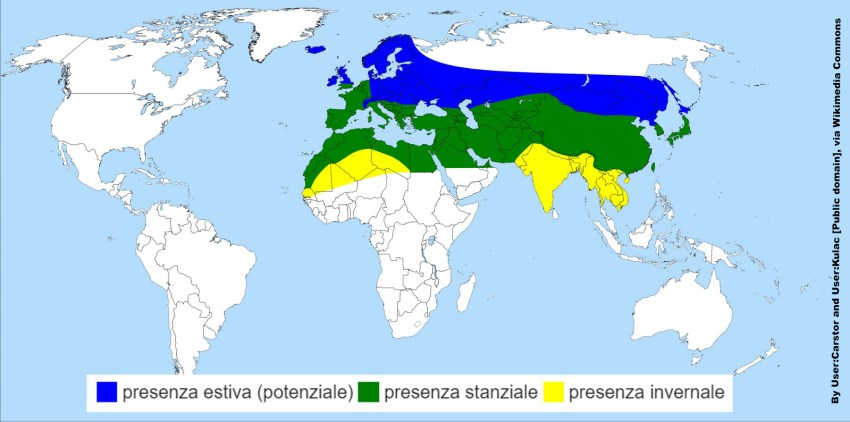 Areale di distribuzione di Macroglossum stellatarum By User:Carstor and User:Kulac [Public domain], via Wikimedia Commons