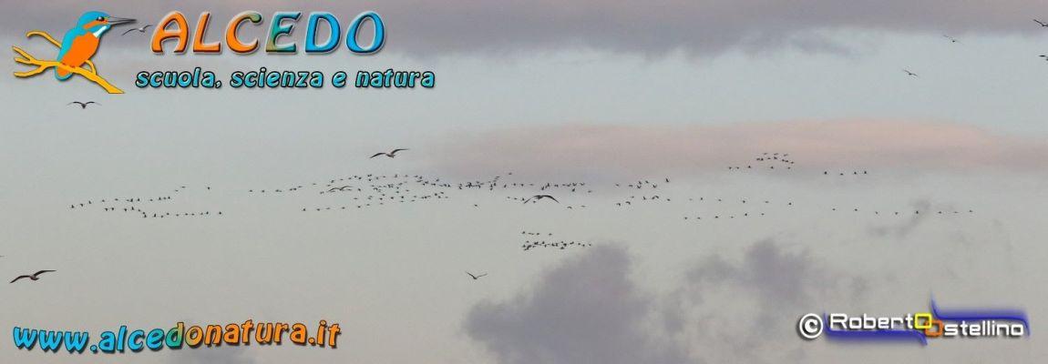 Oasi del Ceretto – Lo spettacolo della migrazione delle Gru 17-11-2018