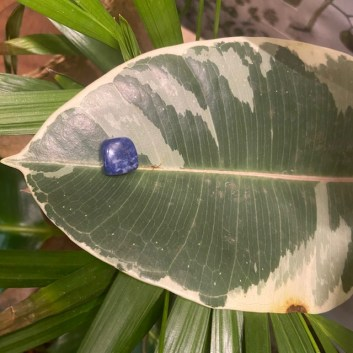 lapislazzuli e ficus elastica variegato