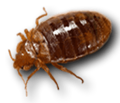 Carpet Beetle Infestation Uk Www Stkittsvilla Com