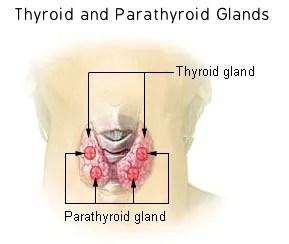 thyroid cancer risk