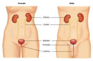 alcohol and bladder cancer