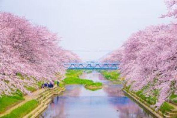 La mejor época para viajar a Japón