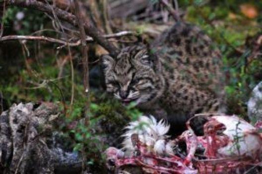 Se adapta fácilmente a su hábitat