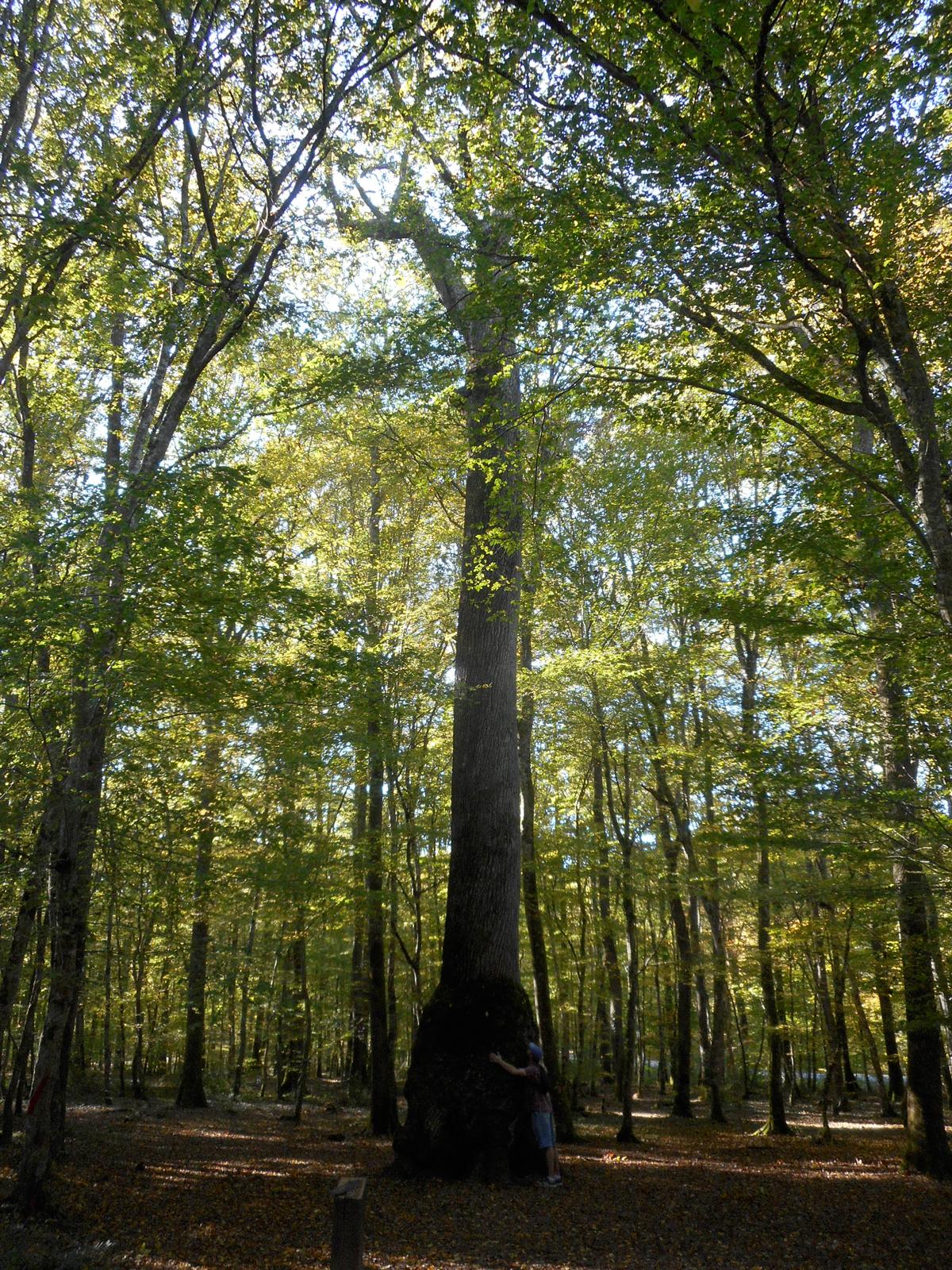 La forêt de Tronçais