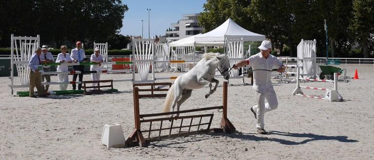 23e Championnat de Chevaux Miniatures - 2018 - Vichy