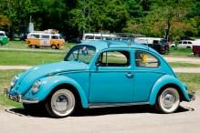 10252_Real-Beetle