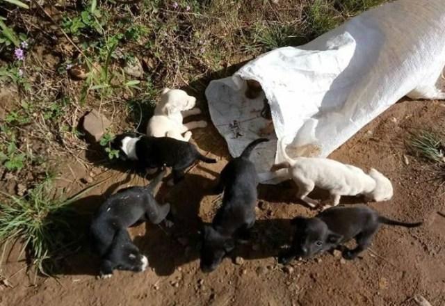 OPAA lança Troco Pet para poder continuar ajudando animais abandonados e que sofrem maus tratos