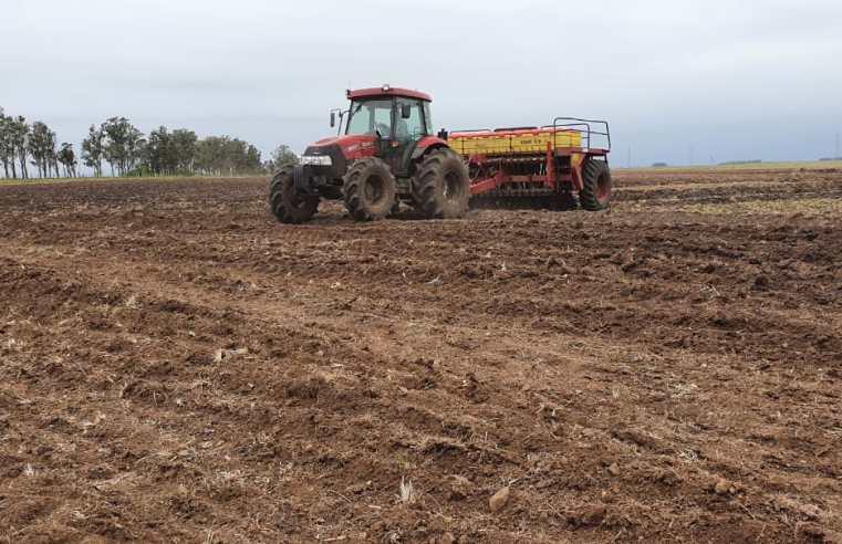 Alegrete atinge 80% da área semeada de arroz para a próxima safra