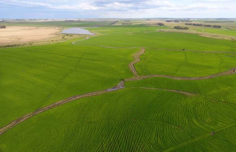 Com níveis das barragens baixos, área semeada de arroz em Alegrete fica em 92%
