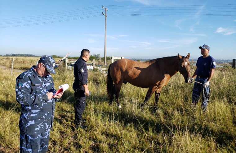 Cai drasticamente o número de cavalos em ruas de Alegrete