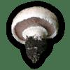 Αγαρικό το δίσπορο - Agaricus bisporus