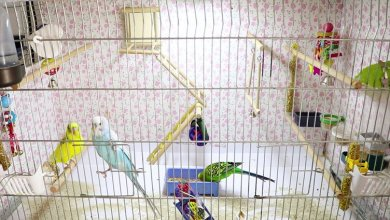 Photo of Best Bird Cage Sizes and shapes